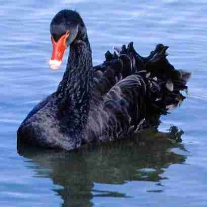 Black Swan — A Review